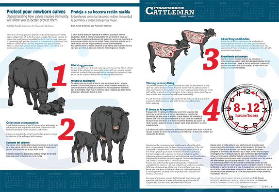 Progressive Cattleman center spread calves