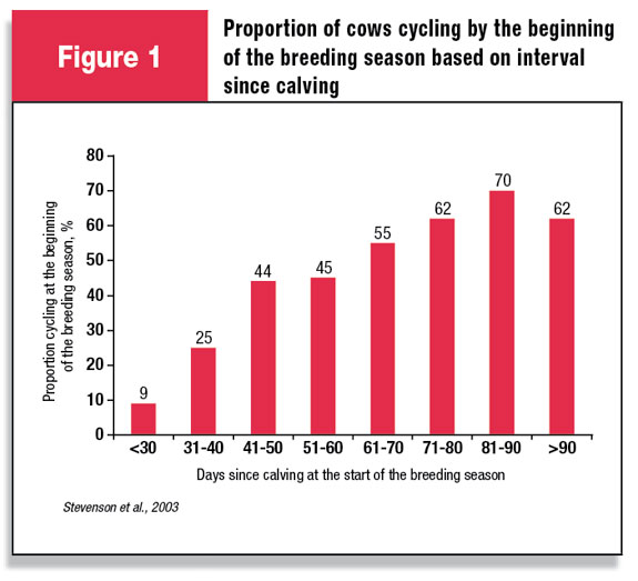 Proportion of cows cycling by the beginning of the breeding season based on interval since calving