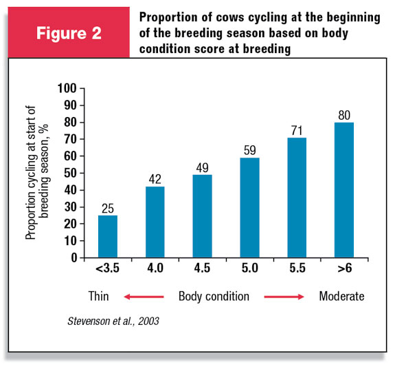 Proportion of cows cycling by the beginning of the breeding season based on body condition score at breeding