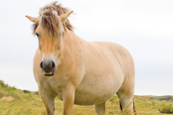 Horse with airplane ears