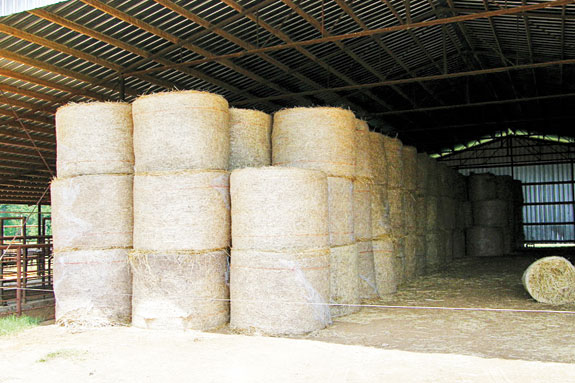 Stacked round bales in a barn