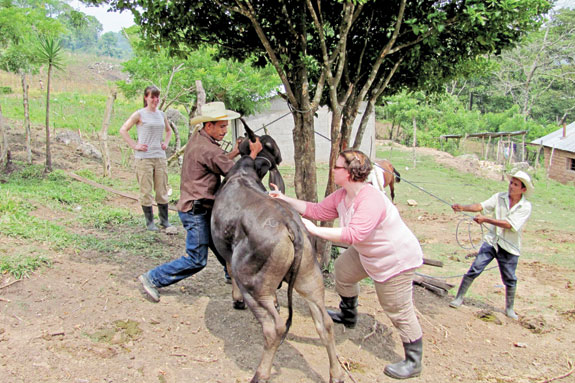 Jessica Lilley stabilizes a cow with a villager to show vaccination protocols