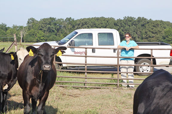 Holly Boland observing cattle