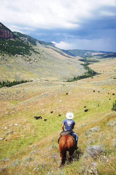 Ryan Goodman rides with cattle in the Big Horn Mountains