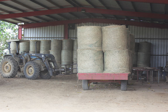 Stockpiled bales of hay