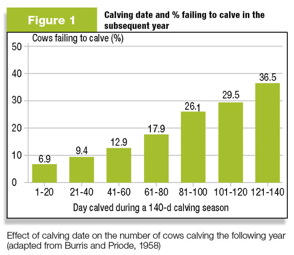 Figure 1: Cows that calve later in the calving season are more likely to fall out of the herd.