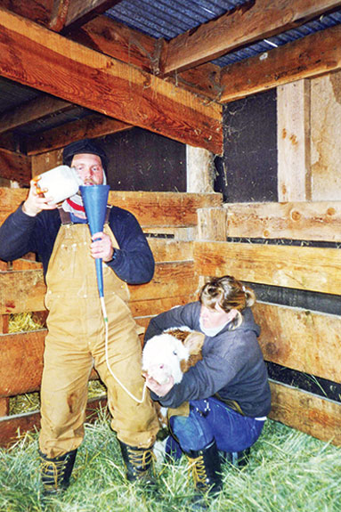 Feeding colostrum to a calf with an esophageal tube