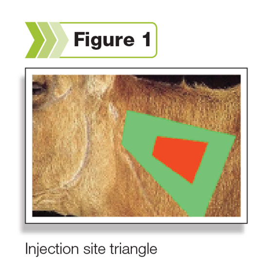 Figure 1: The injection site triangle on the neck