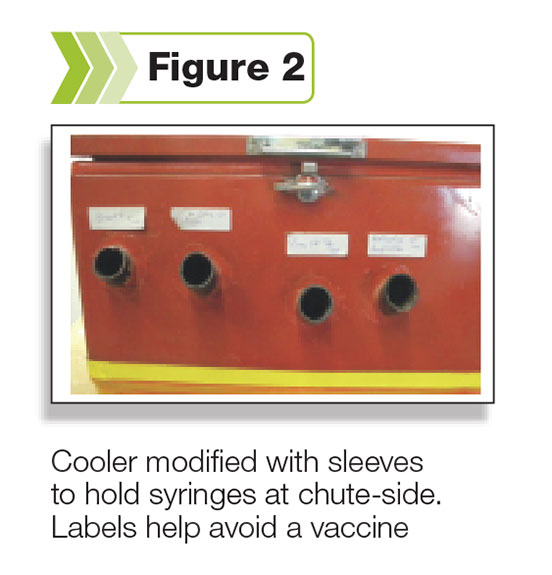 Figure 2: A cooler modified with sleeves, to hold vaccine guns at chuteside.