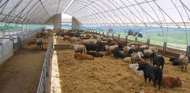 Coverage From The Storm Assessing Covered Feedlots