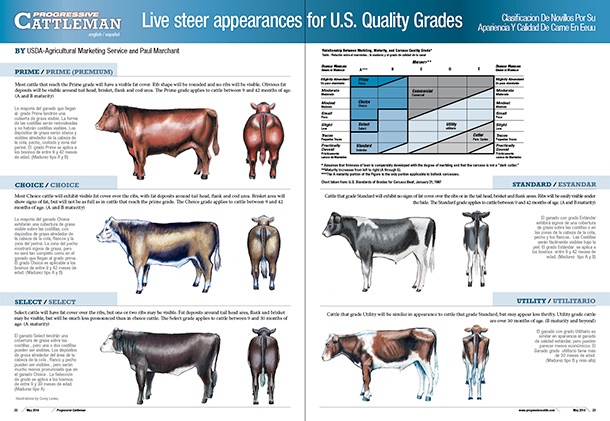 Live steer appearances for U.S. Quality Grades poster