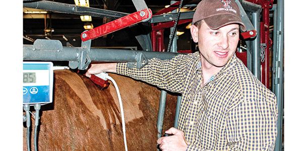 Ultrasound to measure beef quality on the hoof