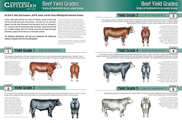 Beef Yield Grades center spread