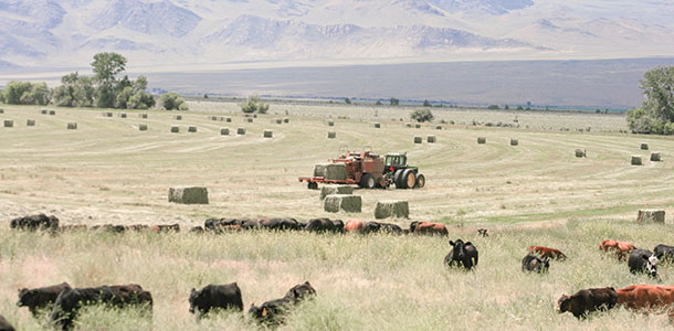 mechanical haying vs. grazing