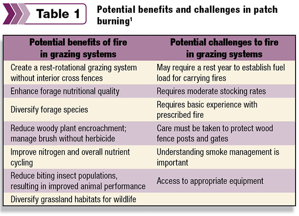 Potential benefits and challenges in patch burning