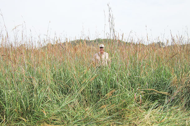Native grasses have earned a reputation of being difficult to establish.