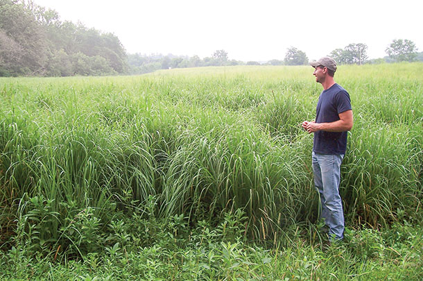 Here a big bluestem stand shows why yields of 4 to 5 tons per acre are possible