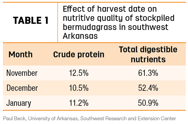 Effect of harvest date on nutritive quality of stockpiled bermudagrass