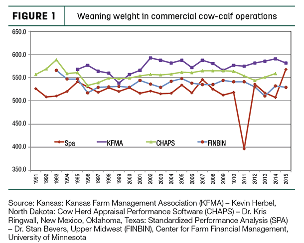 weaning weight in commercial cow-claf operations