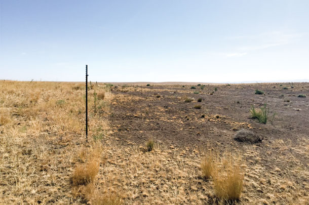 Vacteria was sprayed to control the cheatgrass