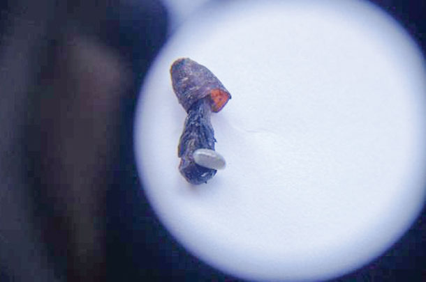 fly control parasitic wasps are biological warfare at its