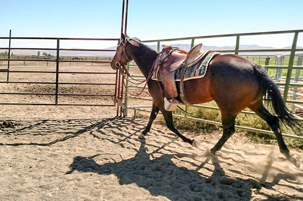 horse in corral