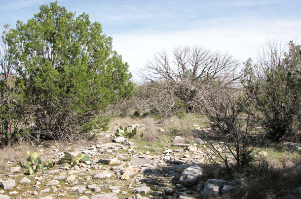 Juniper trees and the terrain