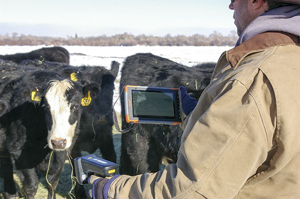 How we got here with RFID, ultra-high-frequency eartags