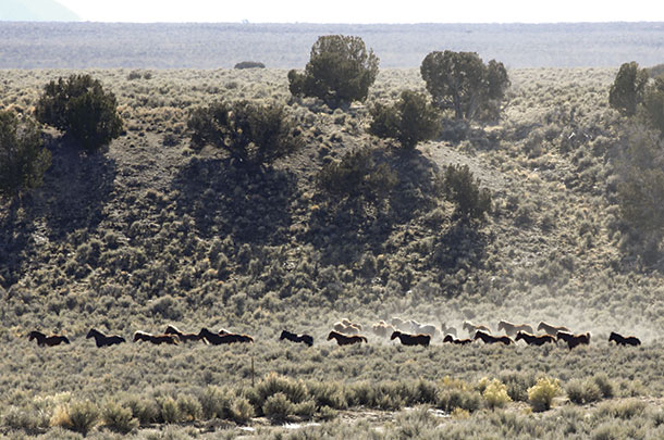 A lorge group of houses heads toward the trap area on the BLM