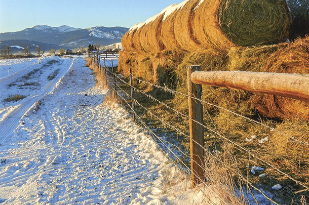 A conventional fence is an ineffective deterrent to elk