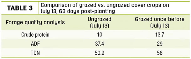 Comparison of grazed vs. ungrazed cover crops on July 13, 63 days post-planting
