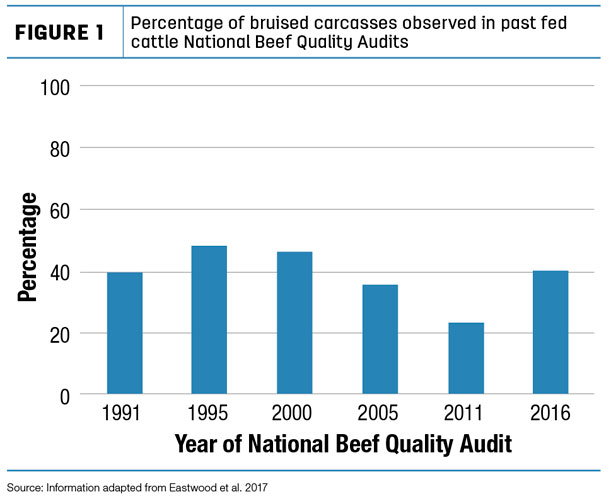percentage of bruising in cattle carcasses