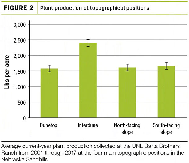 Plant production at topographical positions