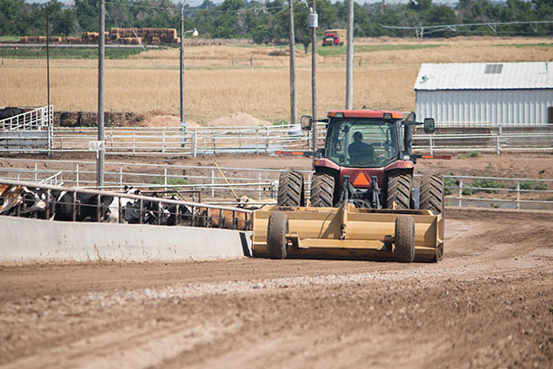 Feedlot safety