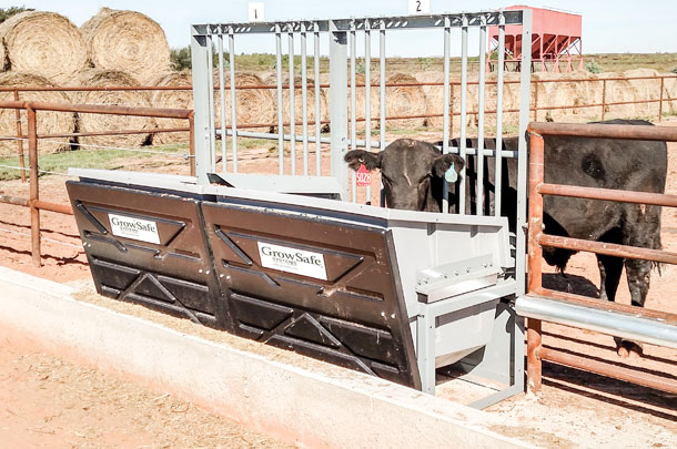 Growsafe bunks at Tucumcan Feed Effciency test
