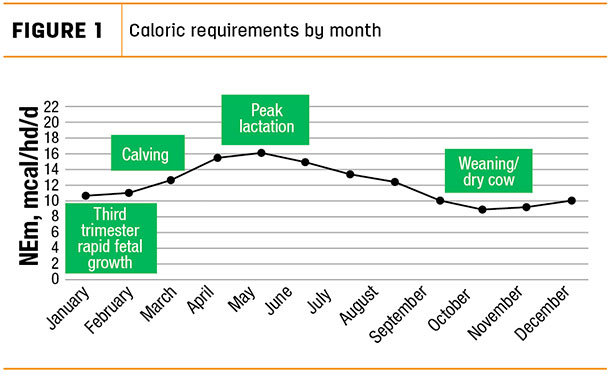 Caloric requirements by month
