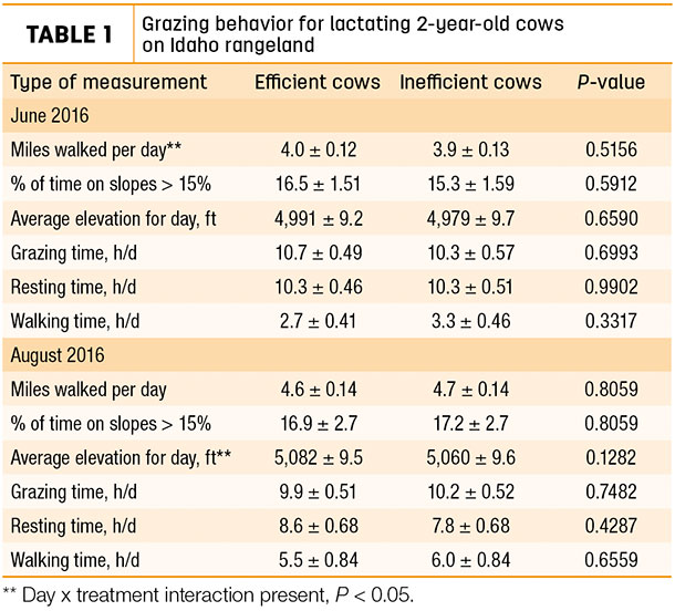 Grazing behavior for lactating 2-year old cows on Idaho rangeland