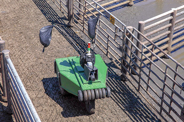 Robot cattle driver can wave flags