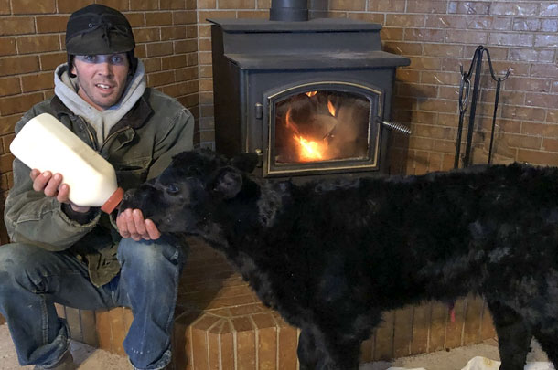 feeding calf by fireplace