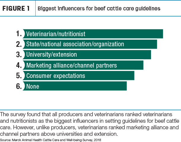 Biggest influencers for beef cattle care guidelines