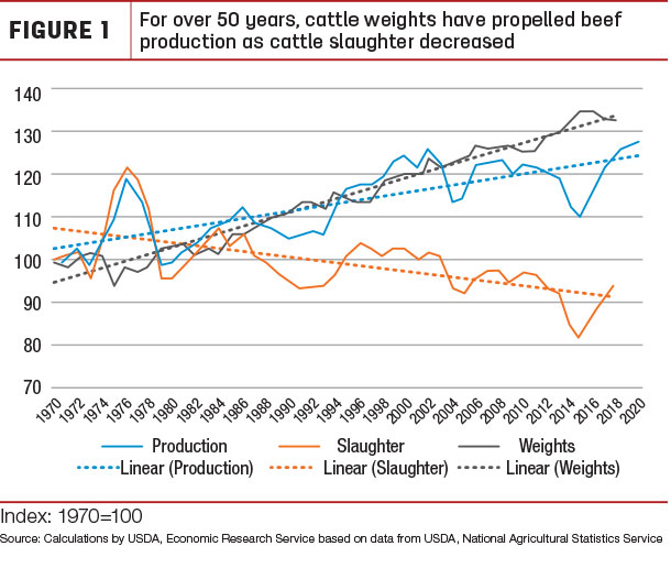 For over 50 years, cattle weights have propelled beef production as cattle slaughter decreased