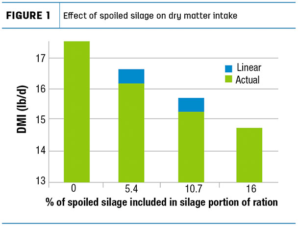 Effect of spoiled silage on dry matter intake