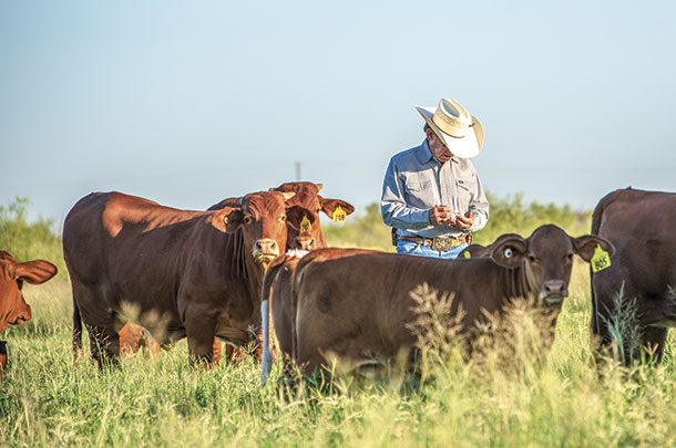 Keeping proper records is required for running registered cattle
