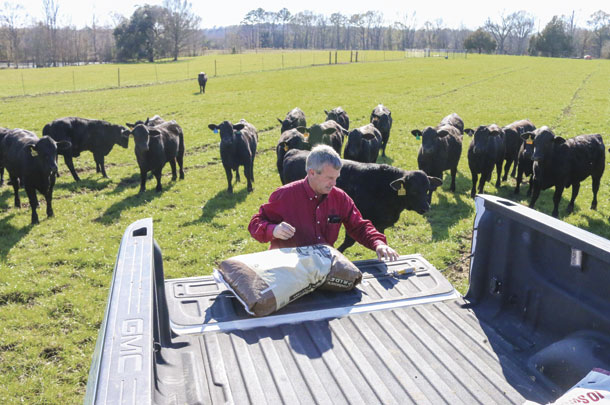 Michael Neal prepares some supplemental range feed for his heifers