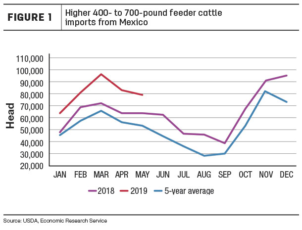 Higher 400 to 700 pound feeder cattle imports from Mexico