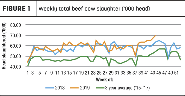 weekly beef cow slaughter