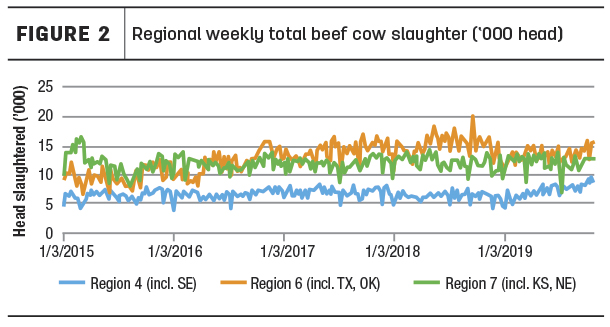 regional cow slaughter