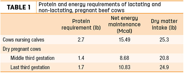 Protein and energy requirements of lactating and non-lactating, pregnana beef cows