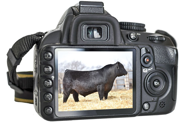 Camera and picture of a bull