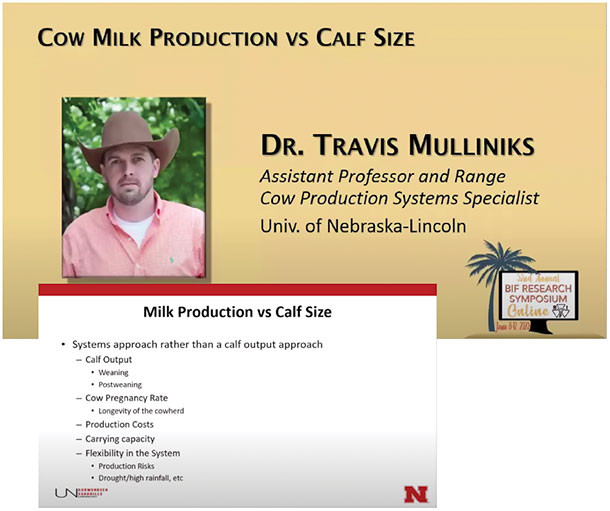 cow milk production vs calf size